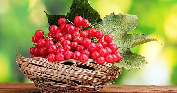 калина - полезная ягода