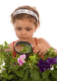 Комнатные растения и ребёнок. Ядовитые комнатные растения