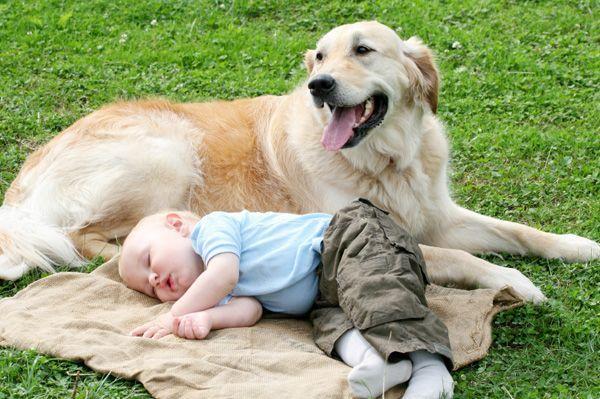 Как выбрать домашнее животное для ребенка?
