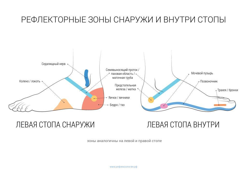 рефлекторные зоны стопы бок