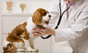 Providing_Pet_Care