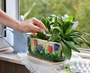 Удобряем комнатные растения