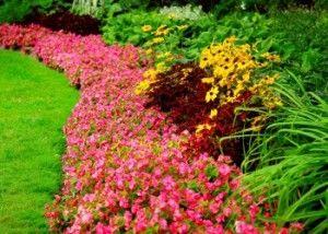 цветовые композиции в саду