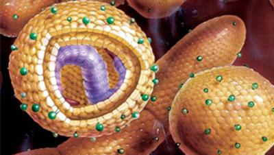 Антитела к гепатиту С