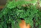Растения-тенелюбы