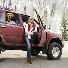 Перевозка собак в автомобиле
