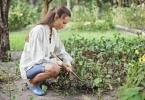 Огородные удобрения