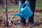 Как удобряют молодые деревья
